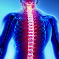 Spinal2